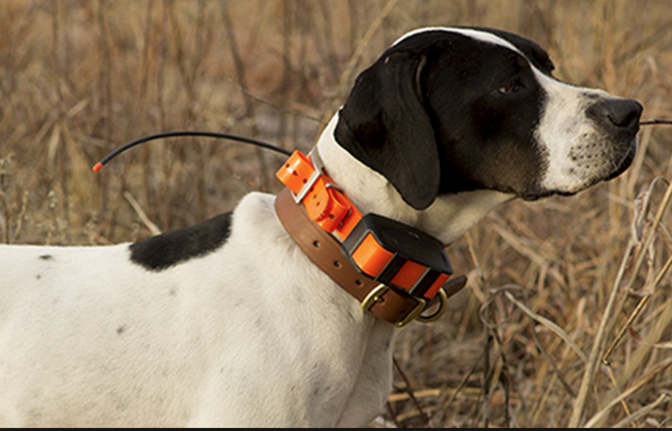 Hundpejl T5 Hundhalsband