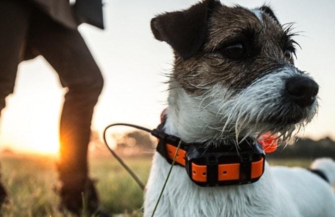 Hundpejl T5 Mini - Hundhalsband GPS
